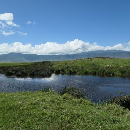 Hippo Pond in Ngorongoro