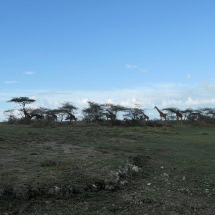 Southern Serengeti